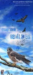 Afiche-Gavilanes-2011