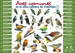 AficheAvesComunesZonaCafetera01