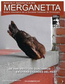 Merganetta071