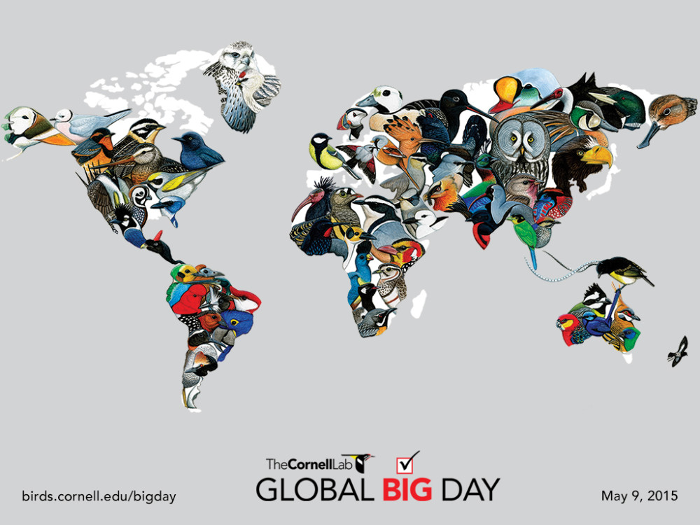 Cornell-Lab-Global-Big-Day-Map