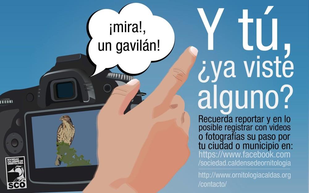 Reporte-Gavilanes